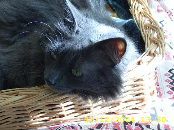 Album - Marius le Chat