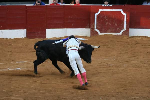 Les toros de la corrida du dimanche aprèes-midi - 6 toros de Adelaïda Rodriguez pour Antonio FERREIRA, Sanchez VARA et Javier CASTAÑO.