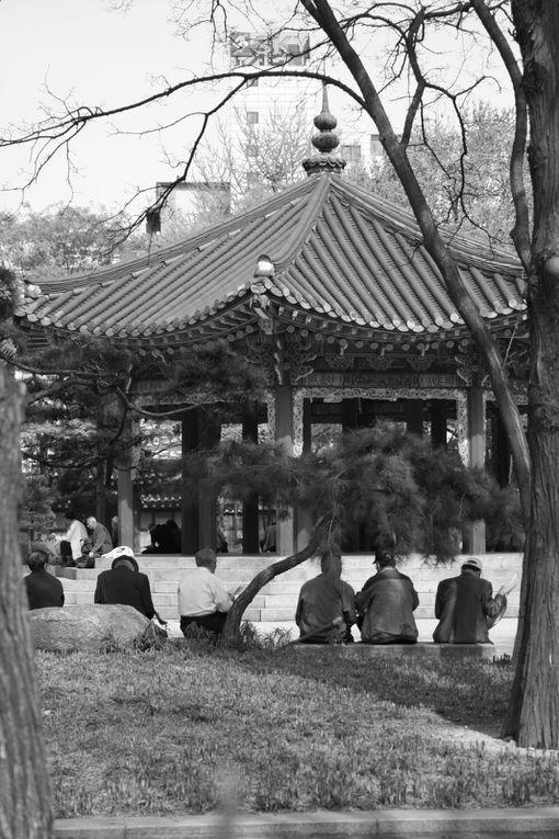 De Séoul à Busan, quelques clics pour immortaliser huit jours au pays du malte calme.