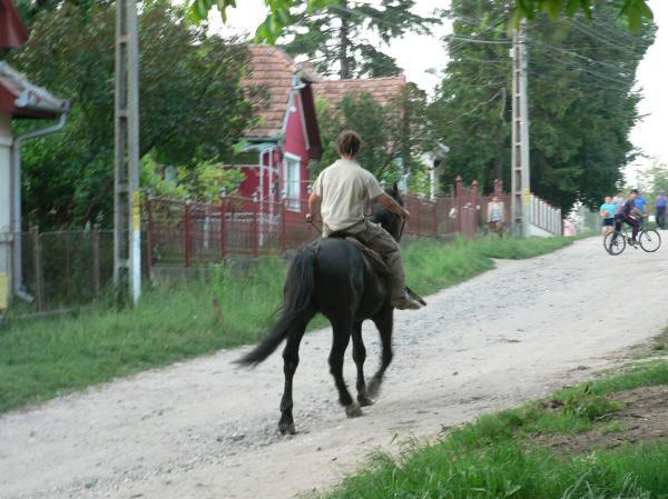 Album - 6_le-cheval