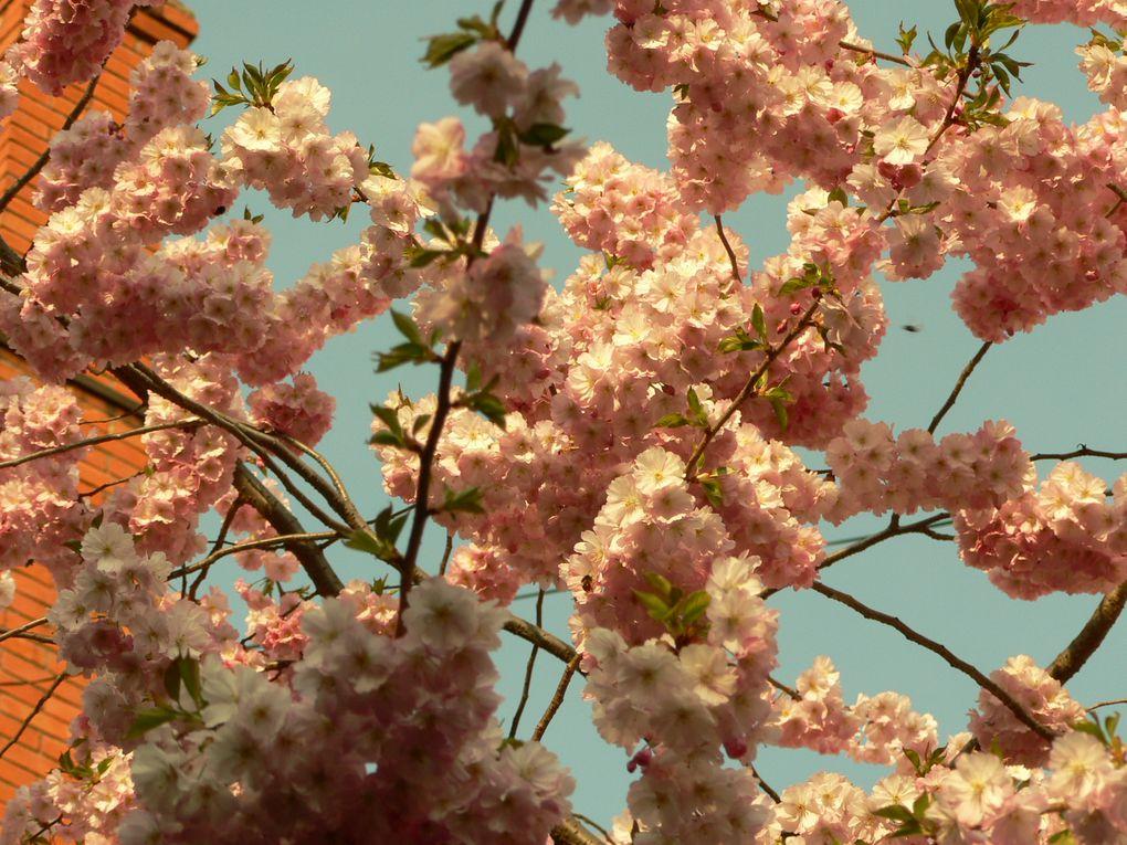 Album - 7_printemps-dijonnais-2009