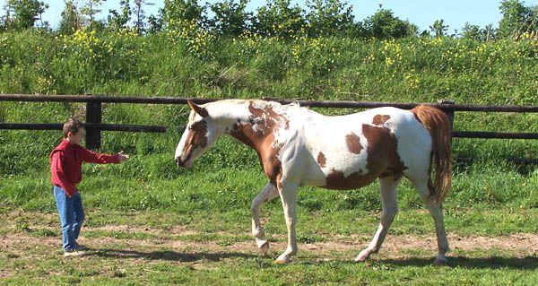 Album - Paint Horse