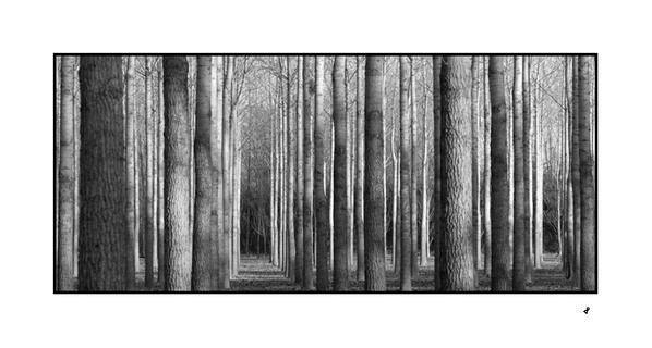 Album - nature