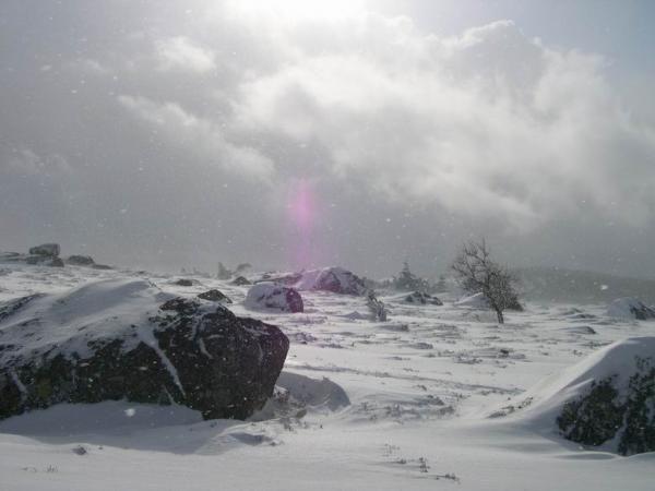 <P>Cet après-midi : balade en raquettes entre le col du Cheval Mort (1454 m) et le Signal de Randon (1551 m) qui est un des points culminants de la Margeride.</P><P>Ciel partagé entre belles éclarcies et averses de neige parfois fortes. Le vent était modéré (30-40 km/h) mais suffisait à soulever la neige et à créer des congères.</P><P>La couche atteint 50 à 70 cm à l'abri du vent dans la forêt. Elle varie de 10 cm sur les crêtes soufflées par le vent quasi permanant depuis 1 mois et demi, à