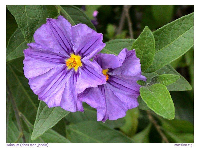 J'aime à photographier les fleurs de mon jardin ou fleurs d'ailleurs où mes voyages me mènent...J'utilise mon petit CANON EOS 350.