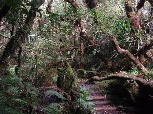Photos prises sur le sentier botanique Notre-Dame de la Paix, dans les environs de Bourg-Murat, Ile de La R&eacute&#x3B;union.