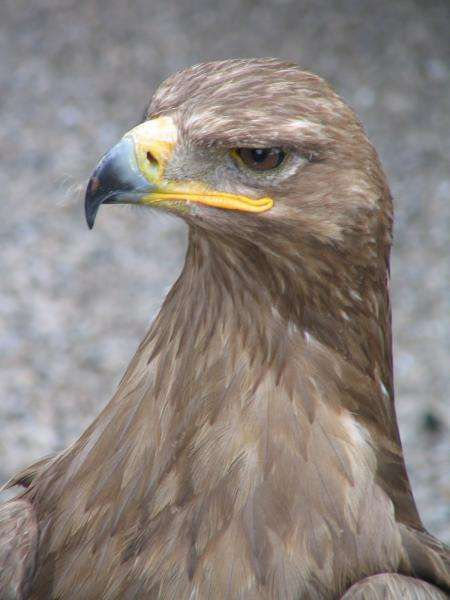 Album - animaux-singes-aigles-alsace