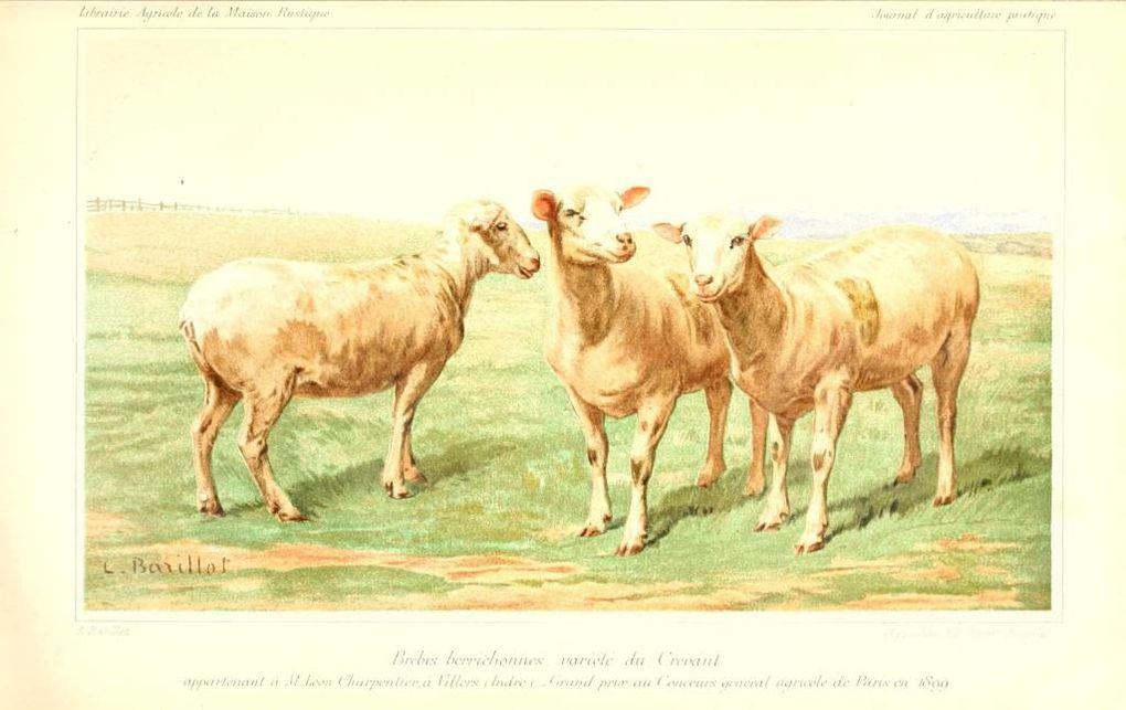 Illustrations anciennes en couleur du monde agricole (animaux d'élevage, plantes...)-