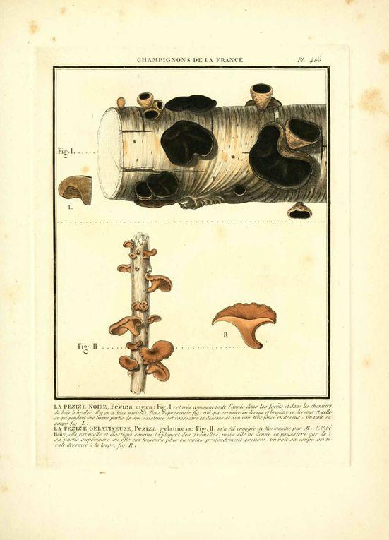 Album - Dessins-gravures-de-champignons-1-