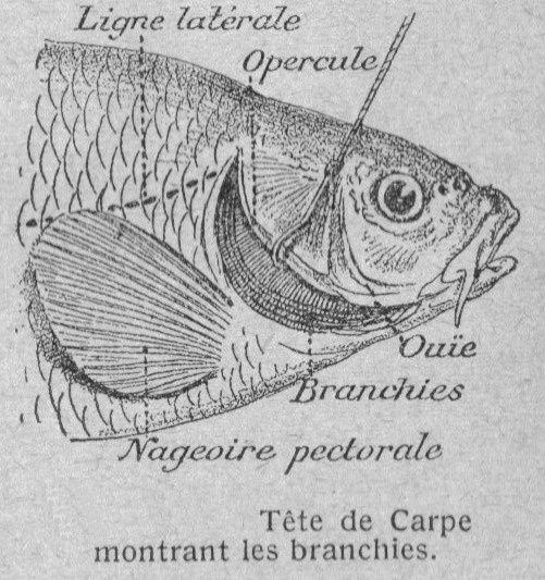 Dessins pour l'enseignement de la zoologie en écoles primaires tirés d'anciens livres scolaires.-