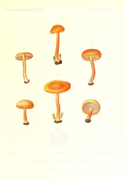 Album - Dessins-de-champignons-