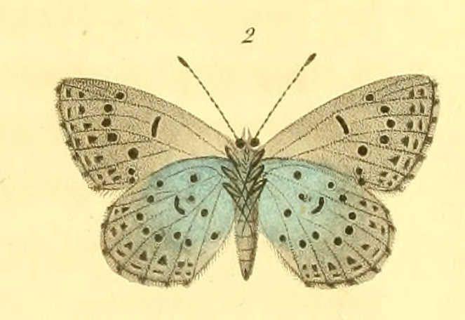Album - Dessins-de-papillons-