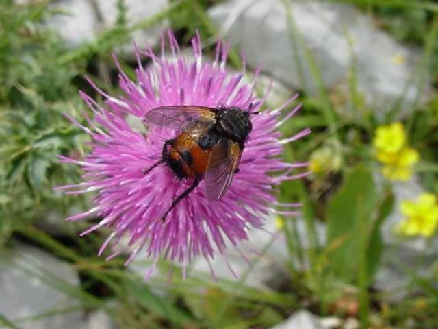 phtos personnelles d'insectes et de fleurs. Photos gratuites libres de droits.
