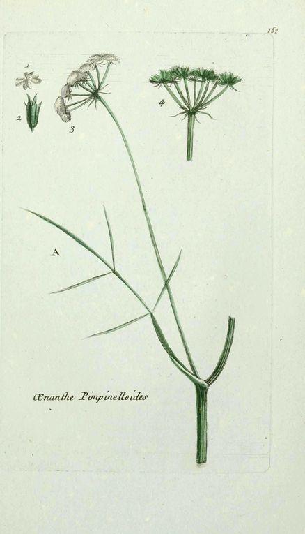 Album - gravures-fleurs-paris-1-