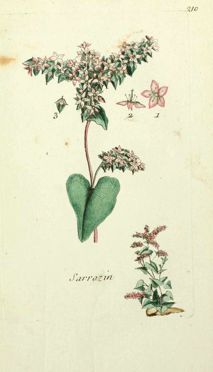 Album - gravures-fleurs-paris-3