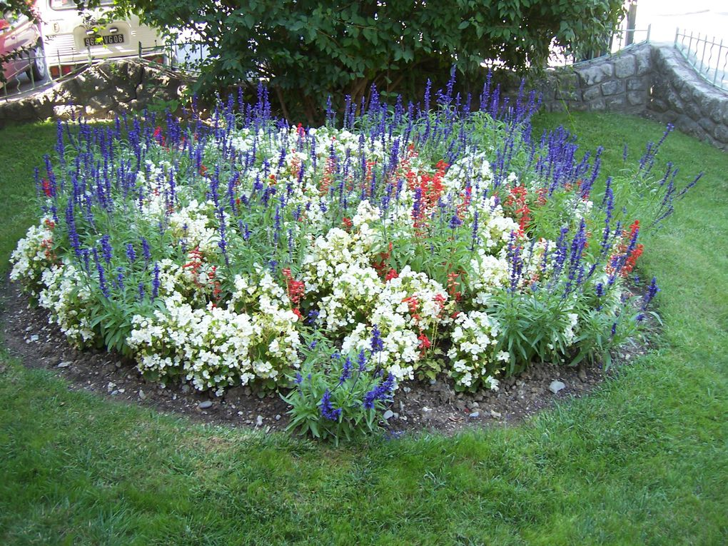 Mes photos personnelles de fleurs des Alpes du sud ou de mon jardin-