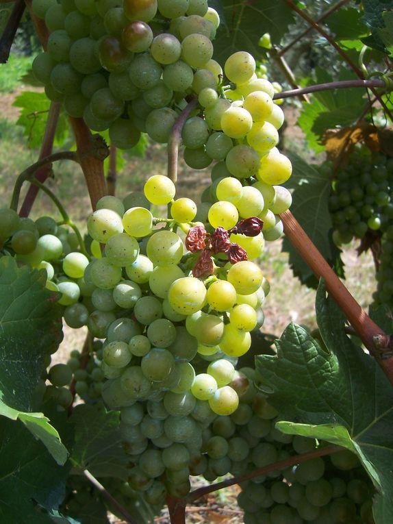 Collection de photos personnelles de fruits sauvages ou cultivés au verger comme au potager.-