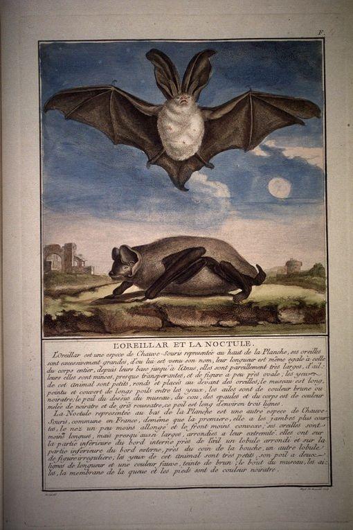 Gravures tirées de De Seve, dess.. (Illustrations de Histoire générale des animaux, des végétaux et des minéraux) 1778