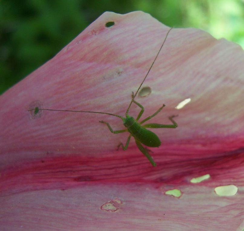 Macro-photos personnelles sur la nature (insectes, fleurs, champignons...)