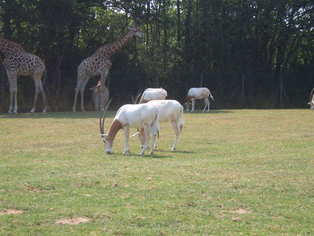 Photos personnelles d'animaux sauvages prises dans le parc animalier Planète Sauvage. Photos gratuites libres de droits.