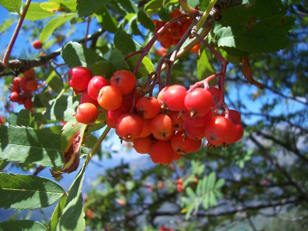Phtos personnelles de plantes du jardin (fruits, légumes...) habituellement prises dans mon jardin voire sur les marchés paysans.