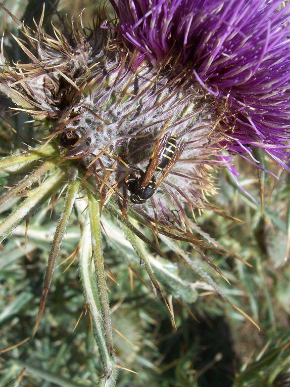 Photos personnelles d'insectes prises sur la Côte d'Azur essentiellement