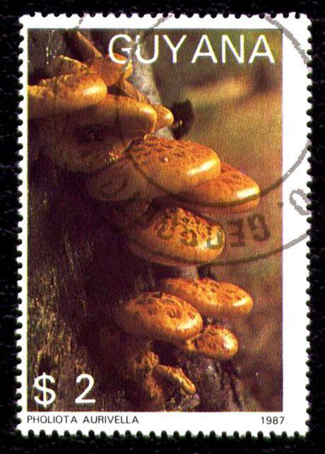 Timbres du monde sur les champignons avec nom du pays et du champignon représenté