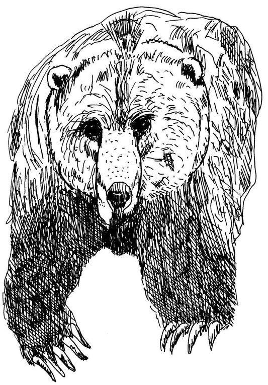 Dessins et/ou coloriages d'animaux sauvages et domestiques