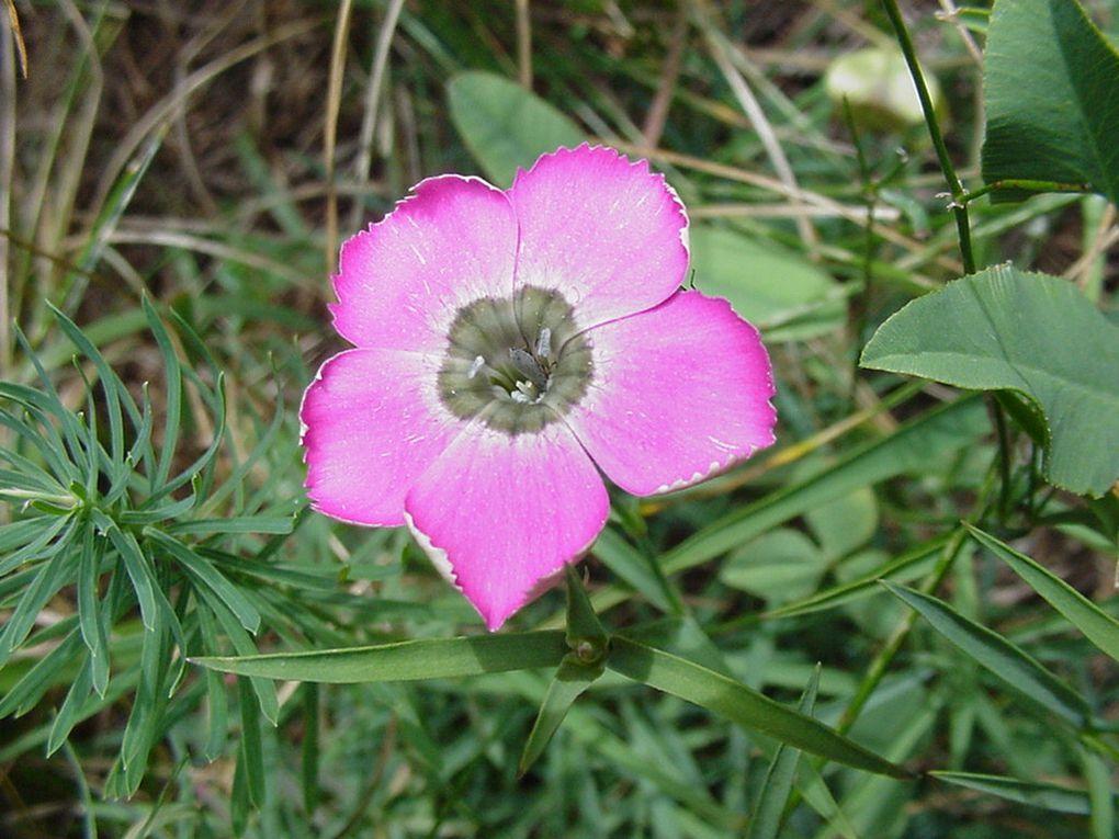 AccueilPhotos de fleurs sauvages ou cultivées. Extraits du site Education à l'Environnement-