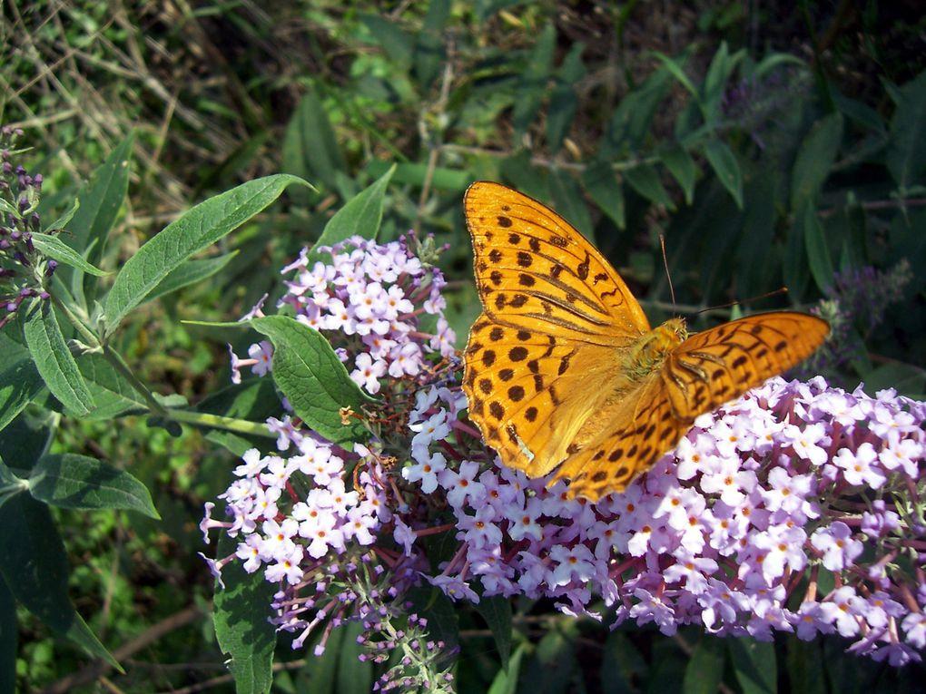 AccueilPapillons de mon jardinPhotos du site Education à l'Environnementhttp://envi