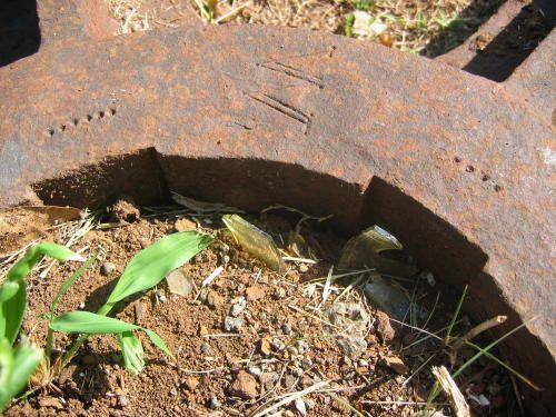 Le flanc d'un moulin a canne, deux roues dent&eacute&#x3B;es, une marque de fondeur W ou M ( peut etre MESNIL, voir album site de CAVANI )<br/>