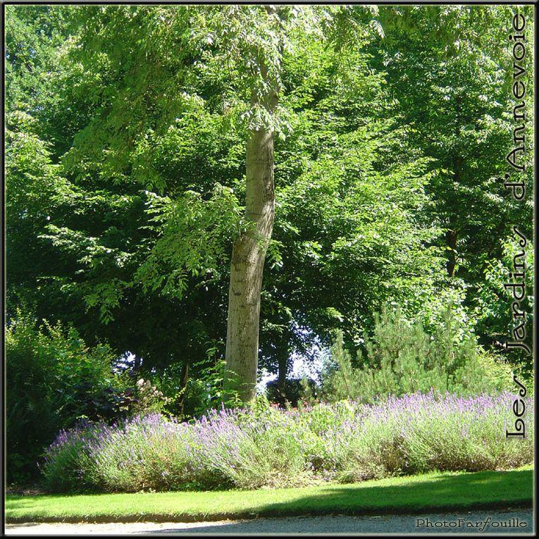 Album - Jardins d'Annevoie ~ 07/2008