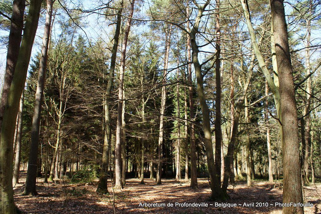 Album - Arboretum de Profondeville