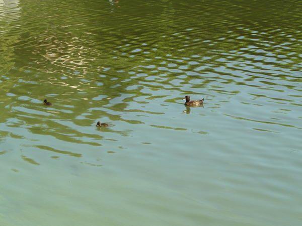 Album - Bambois Lac et Jardins ~ 08/2008
