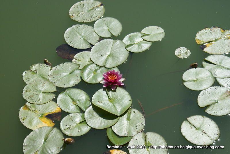 Album - Bambois Lac et Jardins ~ 08/2009