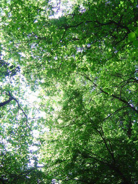 Album - Dans les bois de Belgique
