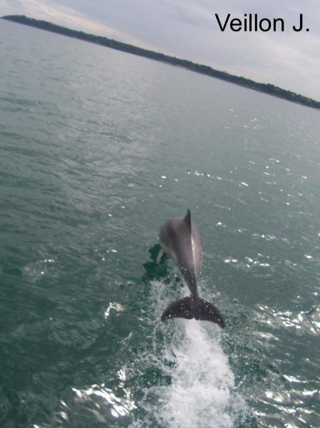 Au fil des sorties de l'association Al Lark, de nombreuses rencontres avec les mammifères marins, nous ont offert la chance de vous rapporter ces quelques photos...&nbsp&#x3B;&nbsp&#x3B;&nbsp&#x3B;&nbsp&#x3B;&nbsp&#x3B;&nbsp&#x3B;&nbsp&#x3B;&nbsp&#x3B;&nbsp&#x3B;&nbsp&#x3B;&nbsp&#x3B;&nbsp&#x3B; Je vous lais