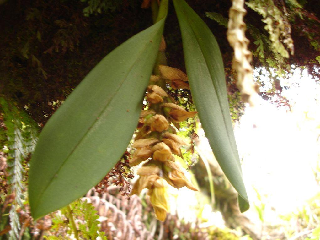 Photos des orchidées que nous avons pu croiser lors de notre voyage à la Réunion