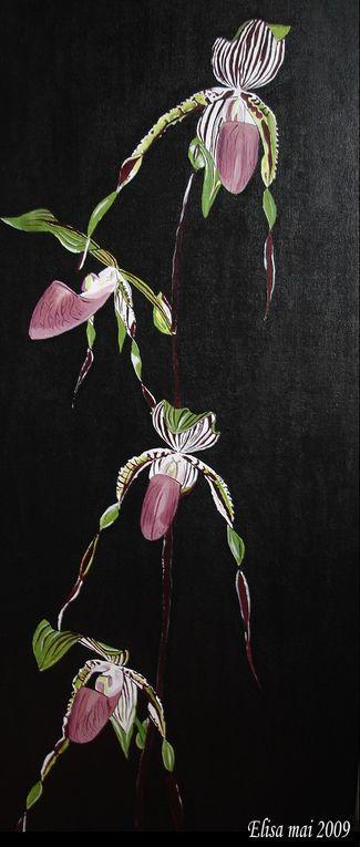 Album - Peintures d'orchidées