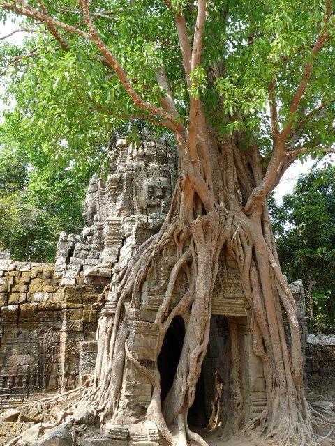 Album - Cambodge 2010