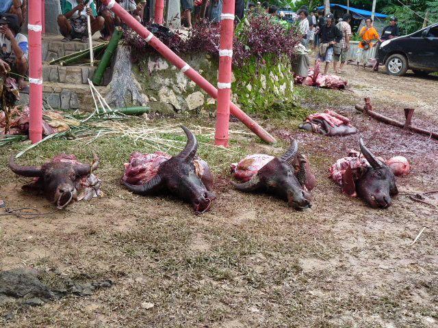 Du paradis des îles Togians et des peuples Bajaux aux rites du pays Toraja!!