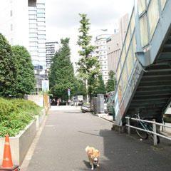 <STRONG>Voici des photos de Tokyo où j'habite et travaille.</STRONG>