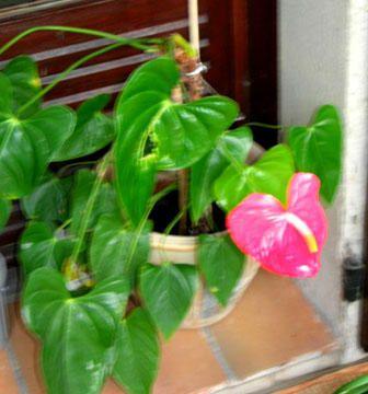 mon atelier dans la maison, est aussi une v&eacute&#x3B;randfa pleine de fleurs