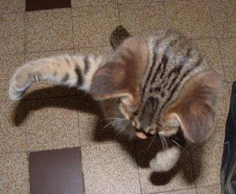 Des p'tits chats :-)