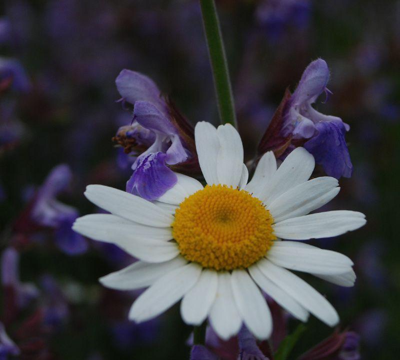 Album - fleurs-et-plantes