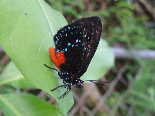 <p>clich&eacute&#x3B;s de la wildlife de Florida</p>