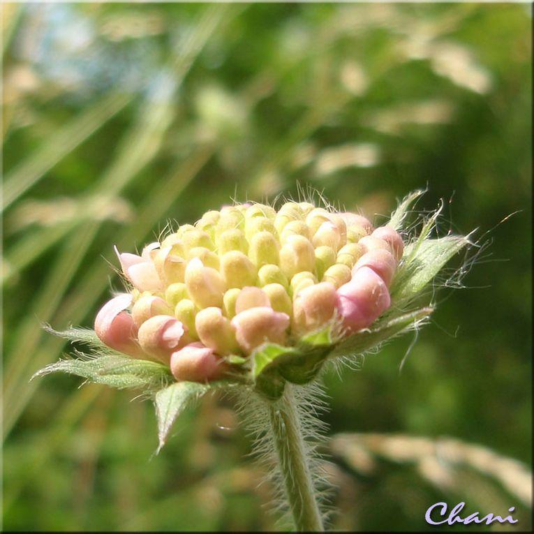 Album - Fleurs et Nature