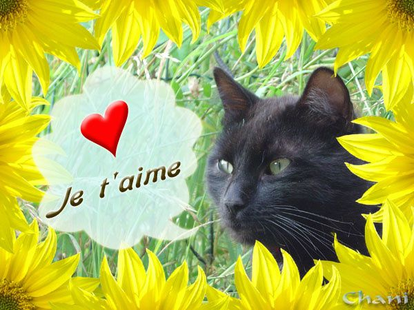 Album - Cartes du chat noir