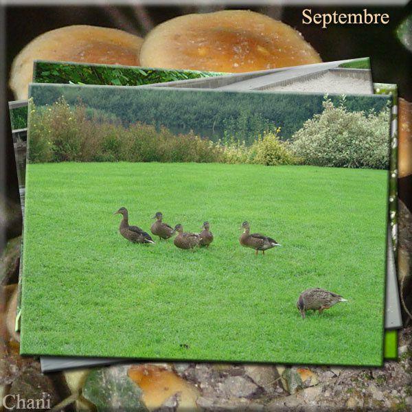 Album - Images de septembre