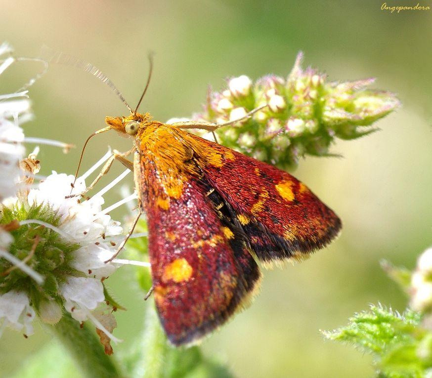 Album - Insectes1